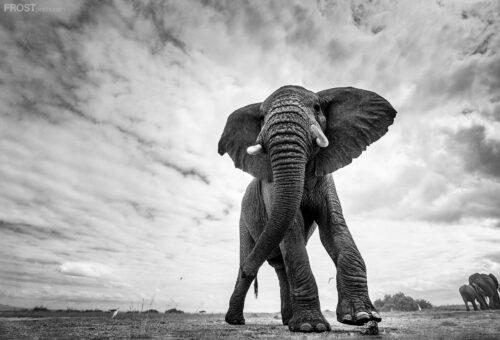 African Wildlife Prints