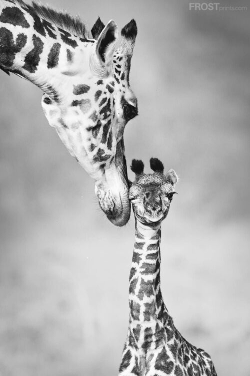 Wildlife Photography Print Collection