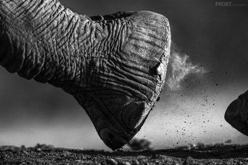 Wildlife Print