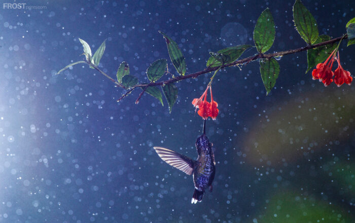 Bird Photography Print