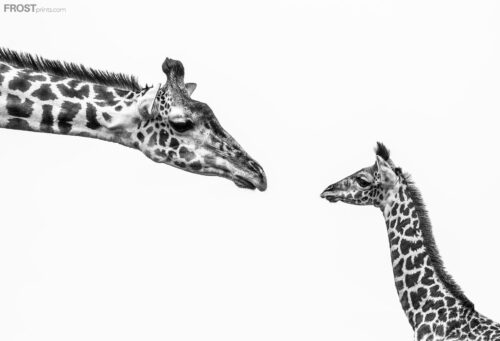Giraffe Motherhood Print