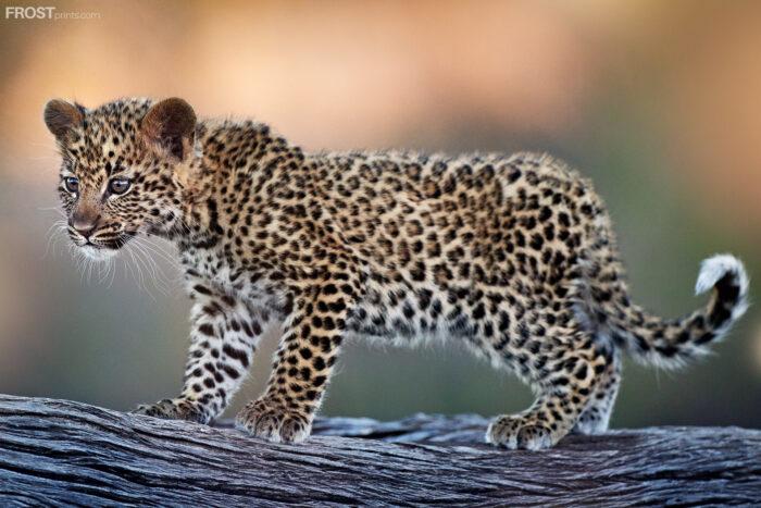 Leopard African Artwork