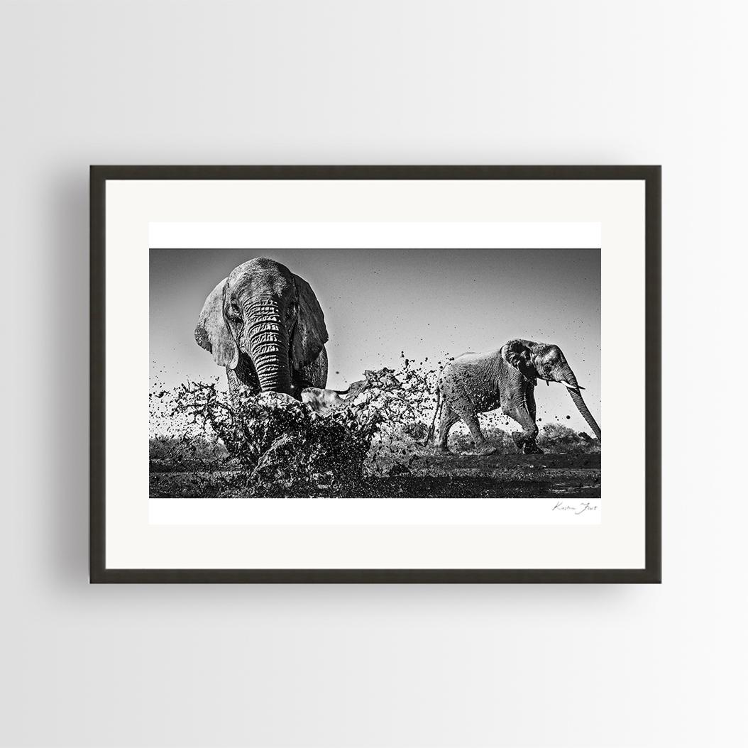 Elephant Fineart Print